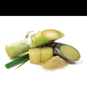 Sugar Cane Extract - Saccharum Officinarum