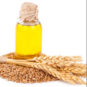 Wheat Oil - Triticum Vulgare